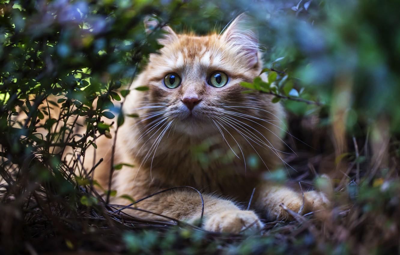 Photo wallpaper grass, cat, face, usaside