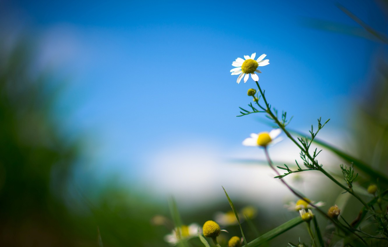 Wallpaper Flower Leaves Flowers Background Widescreen