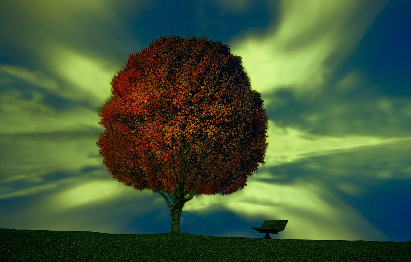 Photo wallpaper tree, bench, Plant your dream