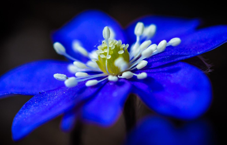 Photo wallpaper flower, nature, background, petals, stamens