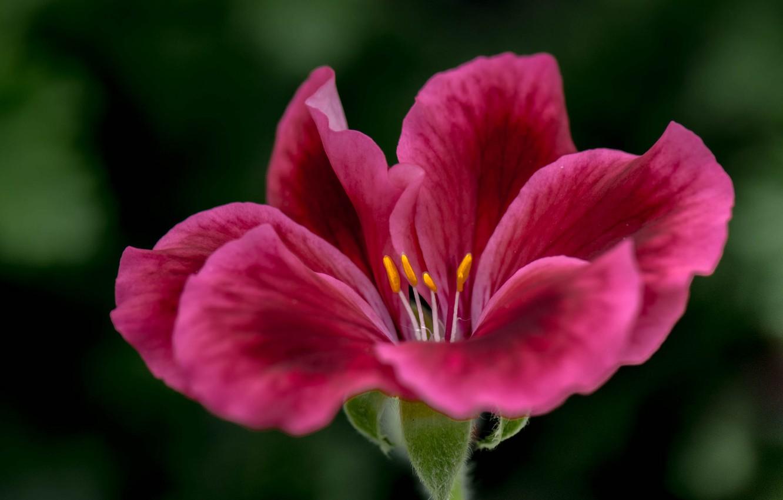Photo wallpaper flower, nature, plant, petals