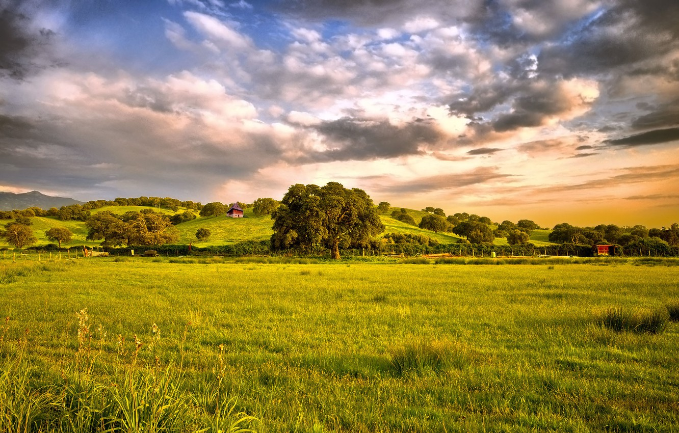 Photo wallpaper field, the sky, grass, clouds, Tree