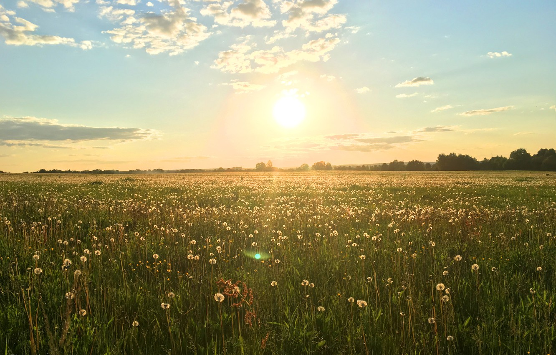 Photo wallpaper field, summer, sunset, nature, dandelions