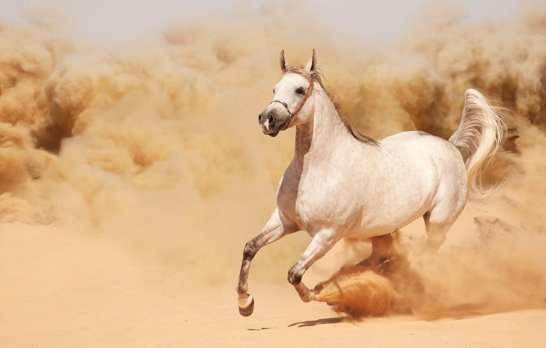 Photo wallpaper sand, horse, horse, dust, running, runs
