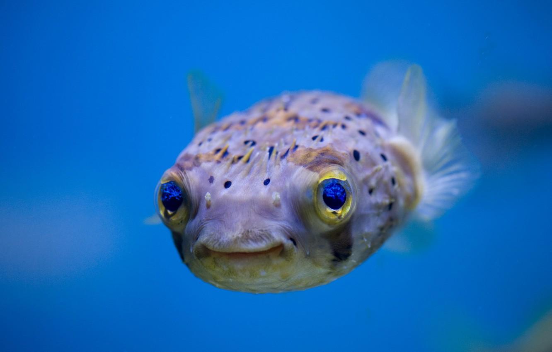 Photo wallpaper water, nature, fish