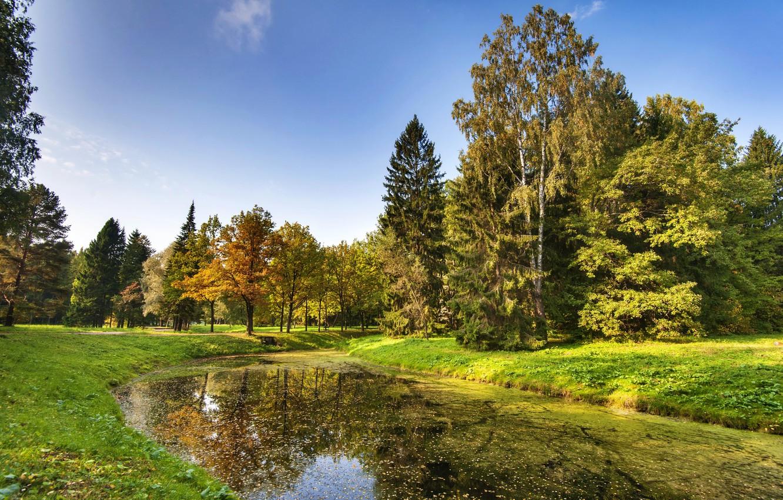 Photo wallpaper autumn, the sky, grass, leaves, the sun, trees, pond, Park, Saint Petersburg, Russia, Pavlovsk