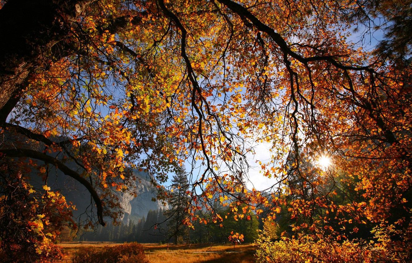 Photo wallpaper autumn, leaves, the sun, branches, tree, Nature