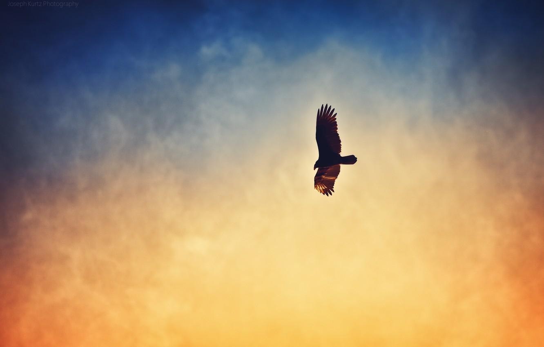 Photo wallpaper the sky, bird, haze