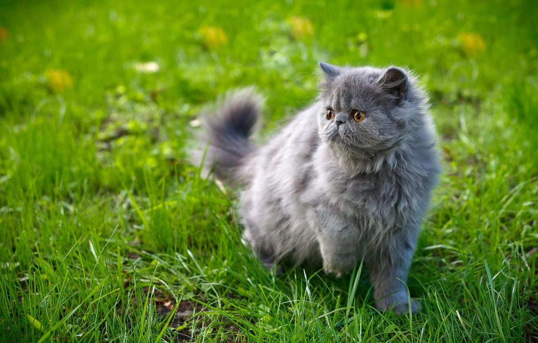 Photo wallpaper cat, grass, look