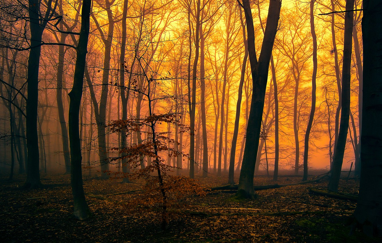 Photo wallpaper autumn, forest, trees, fog, the evening, glow