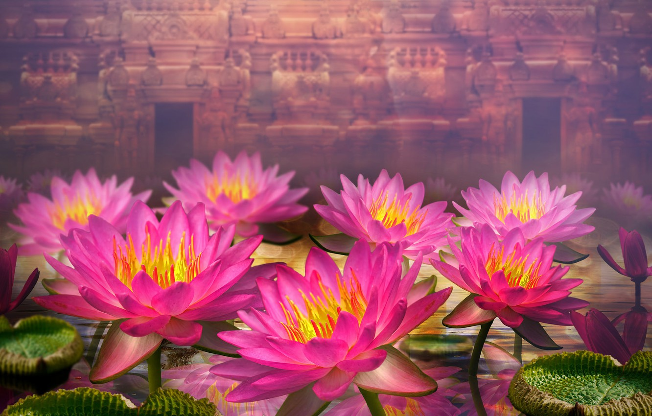 Photo wallpaper leaves, flowers, dal, water lilies, wall