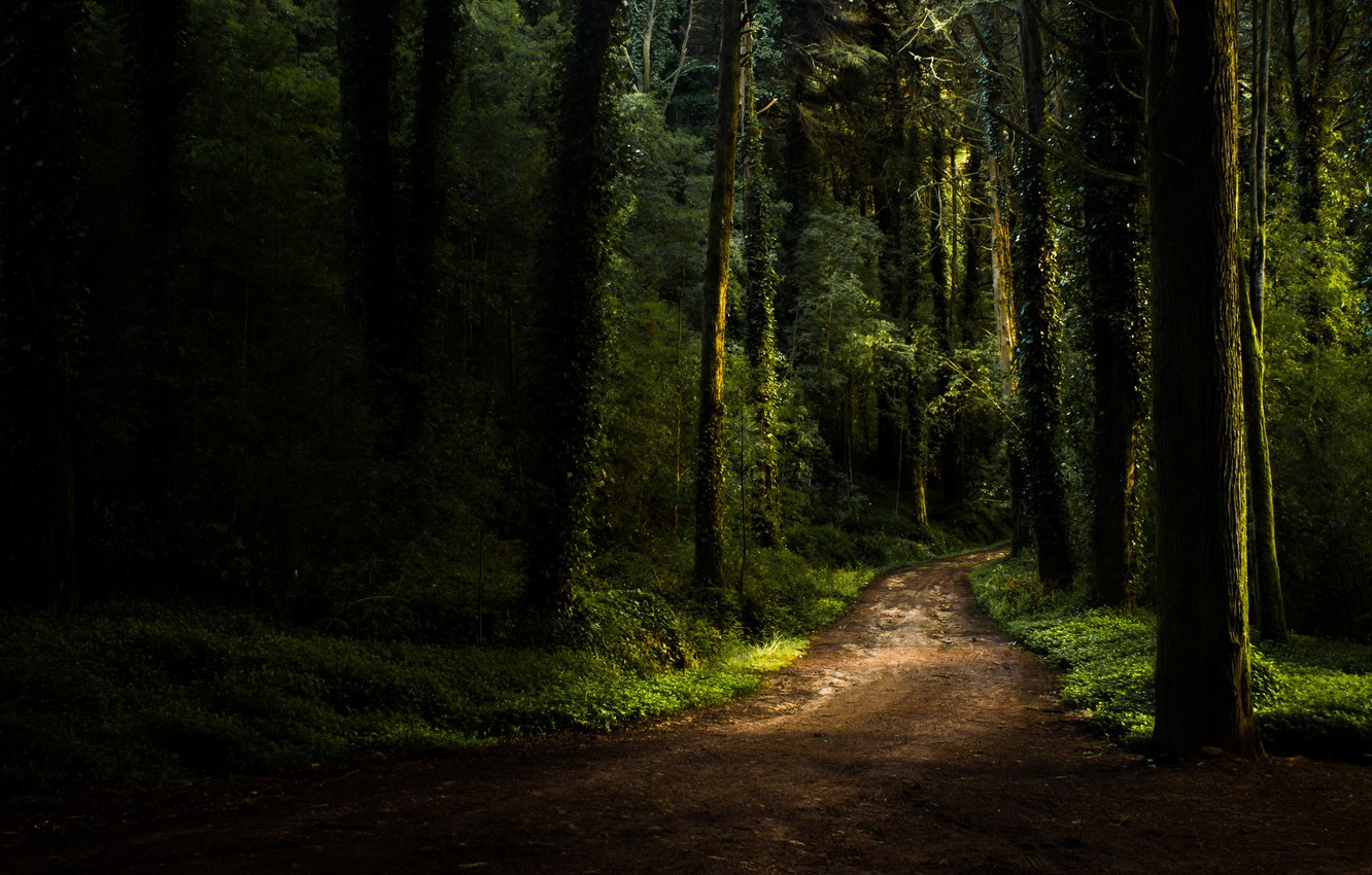 Photo wallpaper road, forest, summer