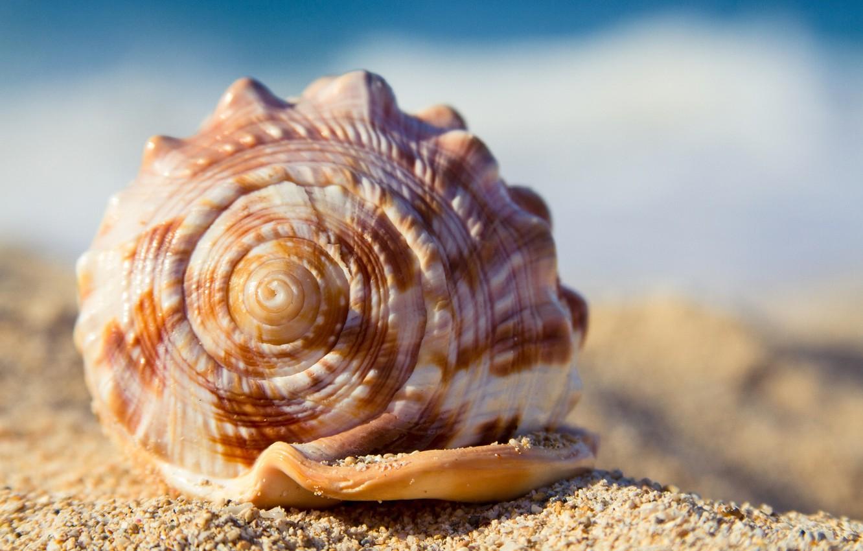 Photo wallpaper sand, beach, summer, shell