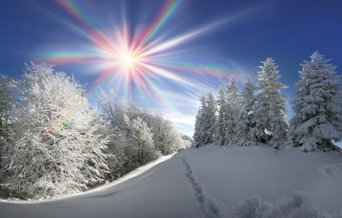 Wallpaper winter forest the sun snow tree nature winter