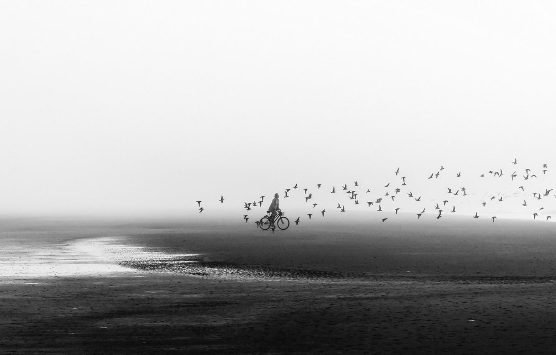 Photo wallpaper beach, birds, bike