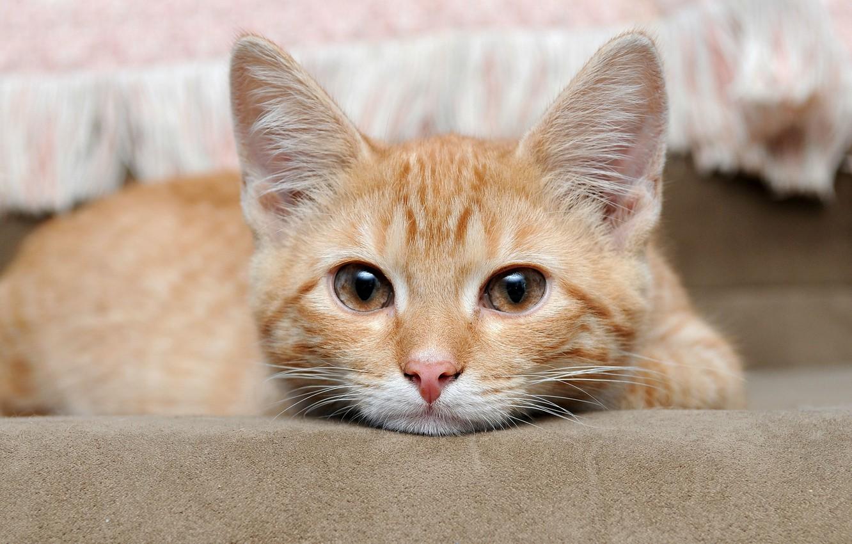 Photo wallpaper cat, eyes, animal, red, eyes, cat, animal