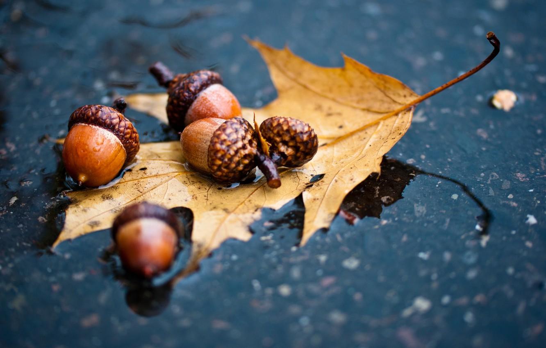Photo wallpaper autumn, asphalt, sheet, rain, puddle, oak, acorn