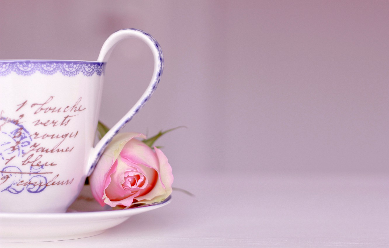 Photo wallpaper flower, labels, background, pink, rose, Cup, words, saucer