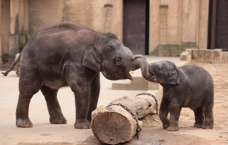 Photo wallpaper joy, meeting, elephants