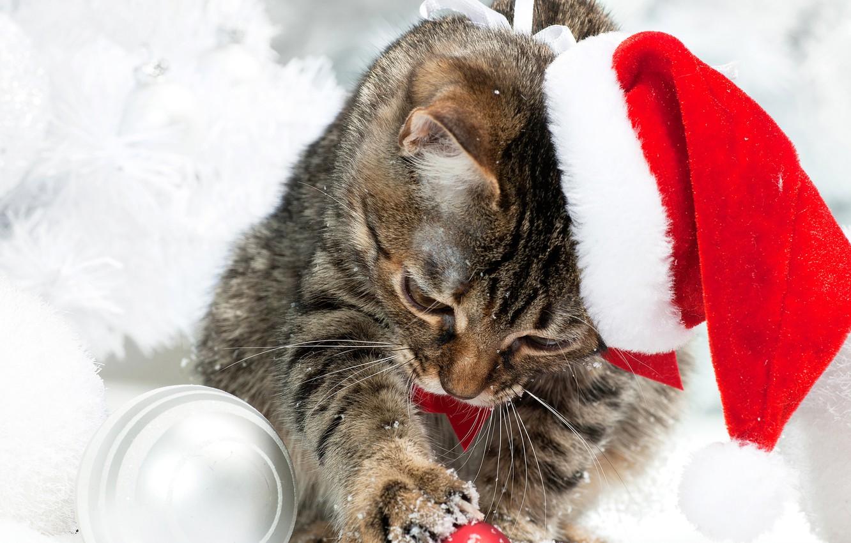 Wallpaper winter, cat, snow, hat ...
