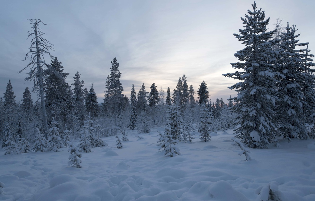 Photo wallpaper winter, forest, snow, trees, Finland, Lapland