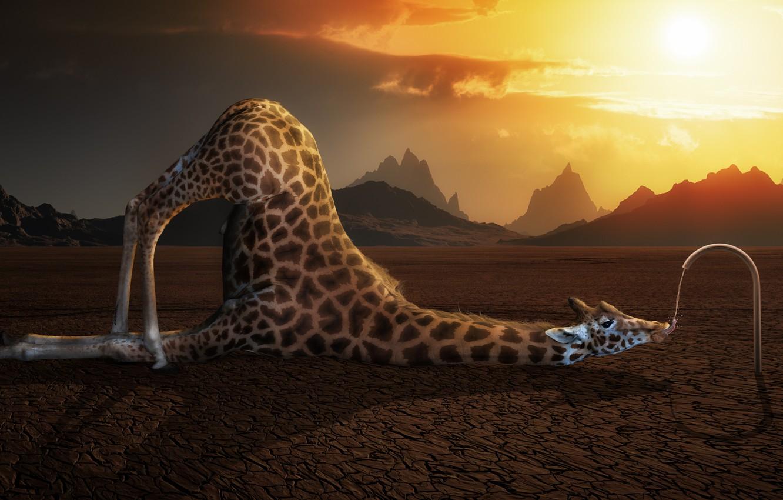 Photo wallpaper water, thirst, drought, giraffe, jet