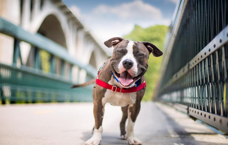 Photo wallpaper face, each, dog, handsome