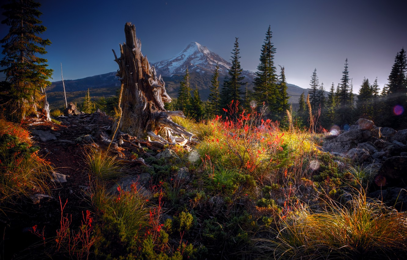 Photo wallpaper forest, grass, glare, stones, mountain, the evening, snag, the bushes