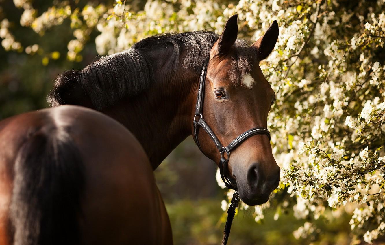 Photo wallpaper summer, nature, horse