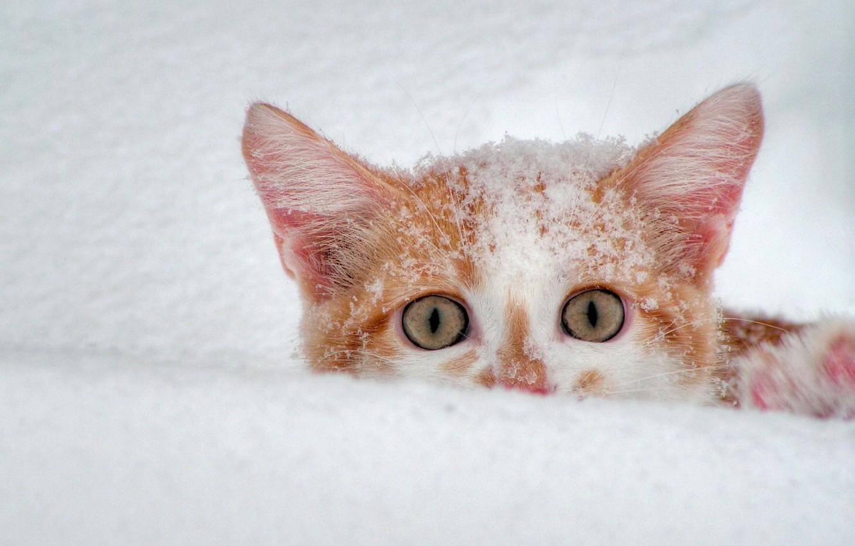 Photo wallpaper winter, white, snow, Koshak, red, 156