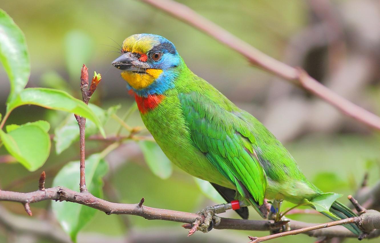 Photo wallpaper leaves, tree, bird, color, branch, feathers, beak