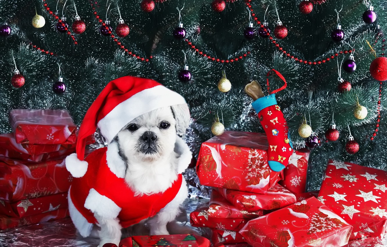 Photo wallpaper look, each, holiday, dog