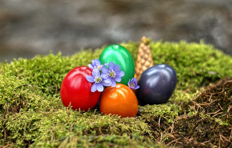 Photo wallpaper flowers, moss, eggs, Easter, bump