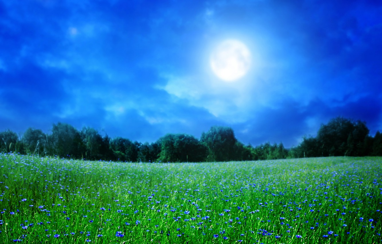Photo wallpaper summer, the sky, grass, trees, landscape, night, nature, the moon, flowers