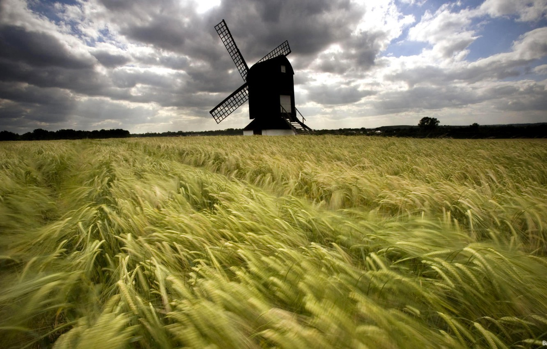 Photo wallpaper greens, field, grass, nature, tree, mill, spinning