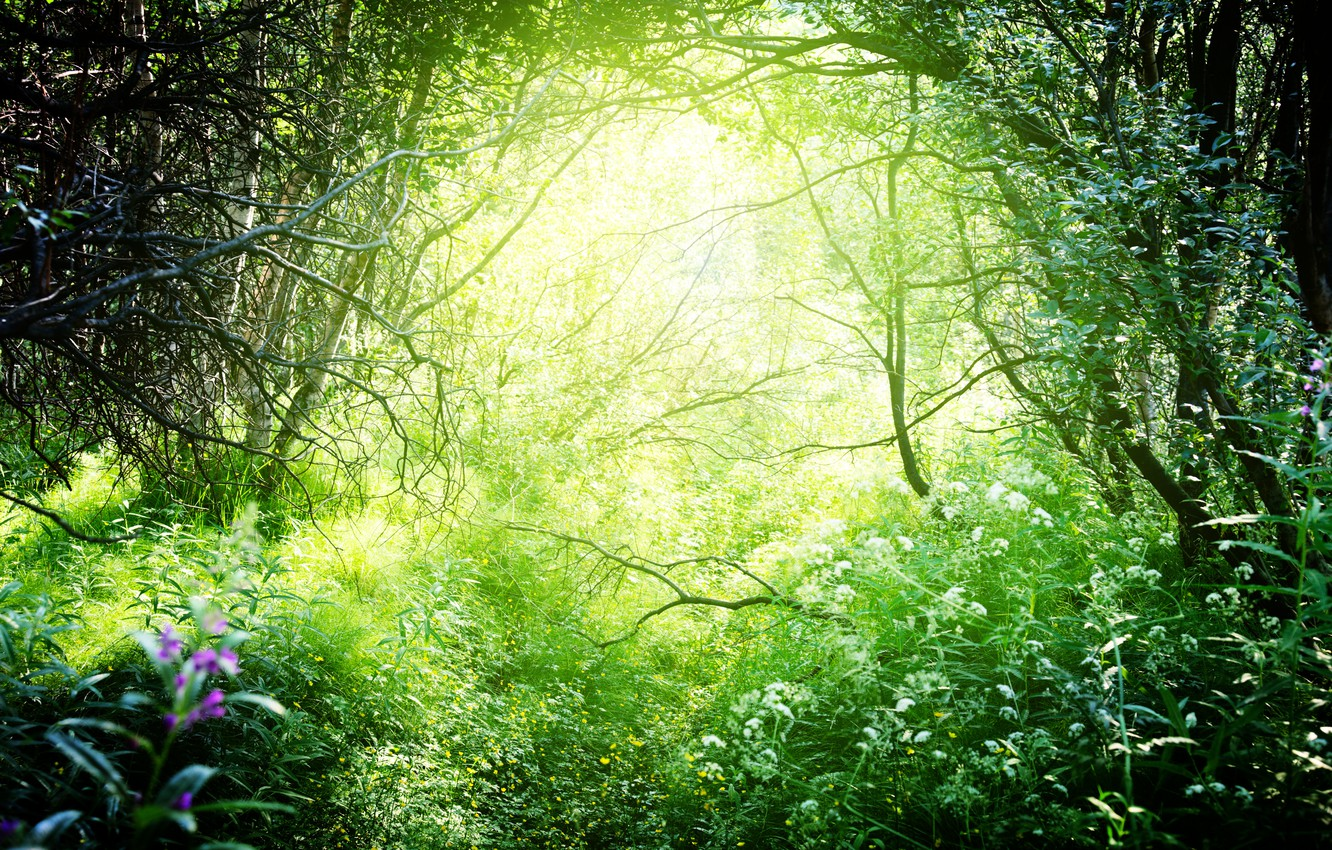 Photo wallpaper greens, forest, grass, the sun, trees, branches, nature, the bushes