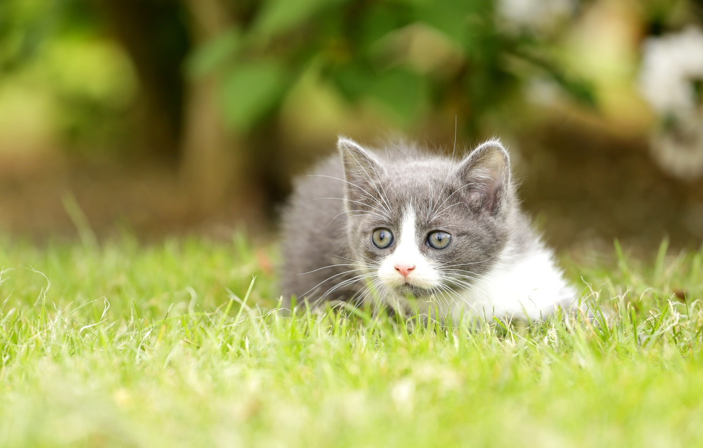 Photo wallpaper grass, look, kitty, bokeh
