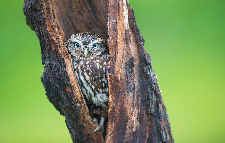 Photo wallpaper tree, owl, bird