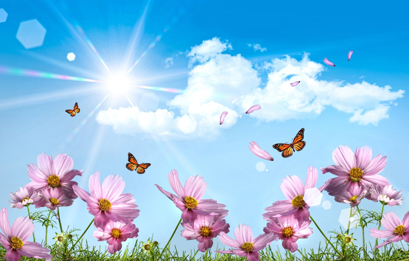Photo wallpaper the sun, butterfly, The sky
