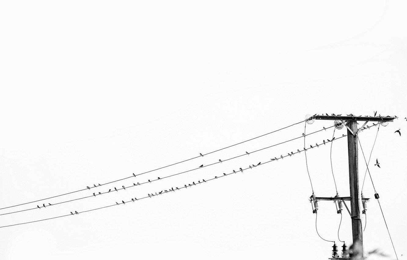 Wallpaper Black And White High Voltage Birds On A Wire Images