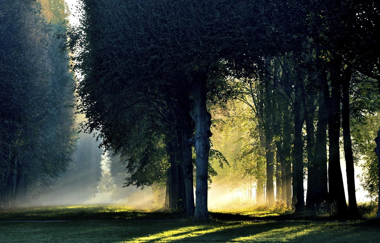 Photo wallpaper autumn, forest, light, fog, morning, October