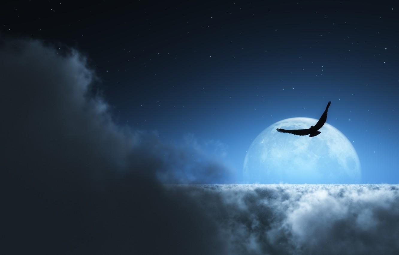Photo wallpaper stars, clouds, bird, the moon