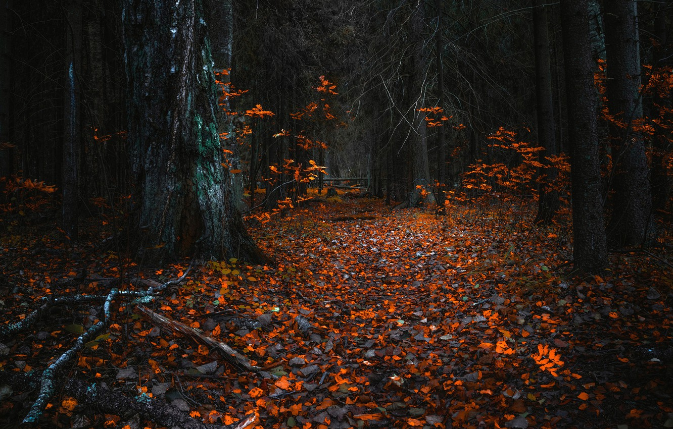 Photo wallpaper autumn, forest, leaves, trees