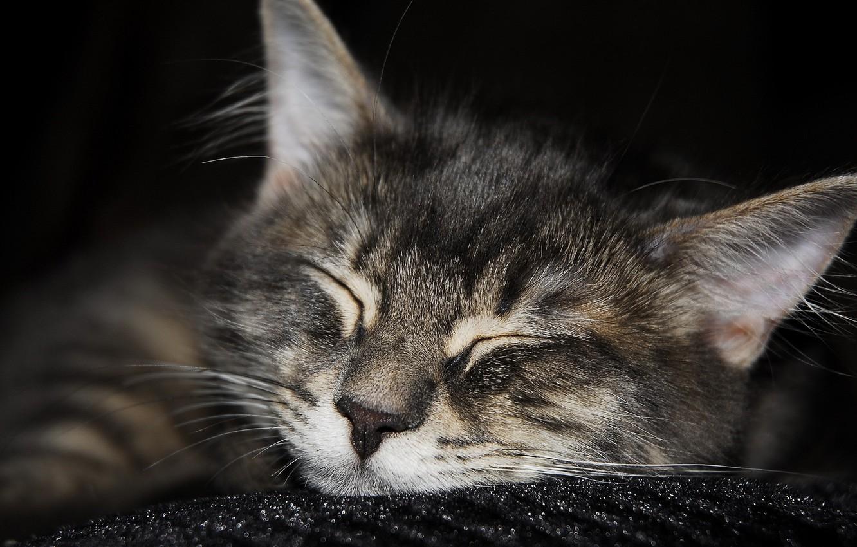 Photo wallpaper Koshak, sleeping