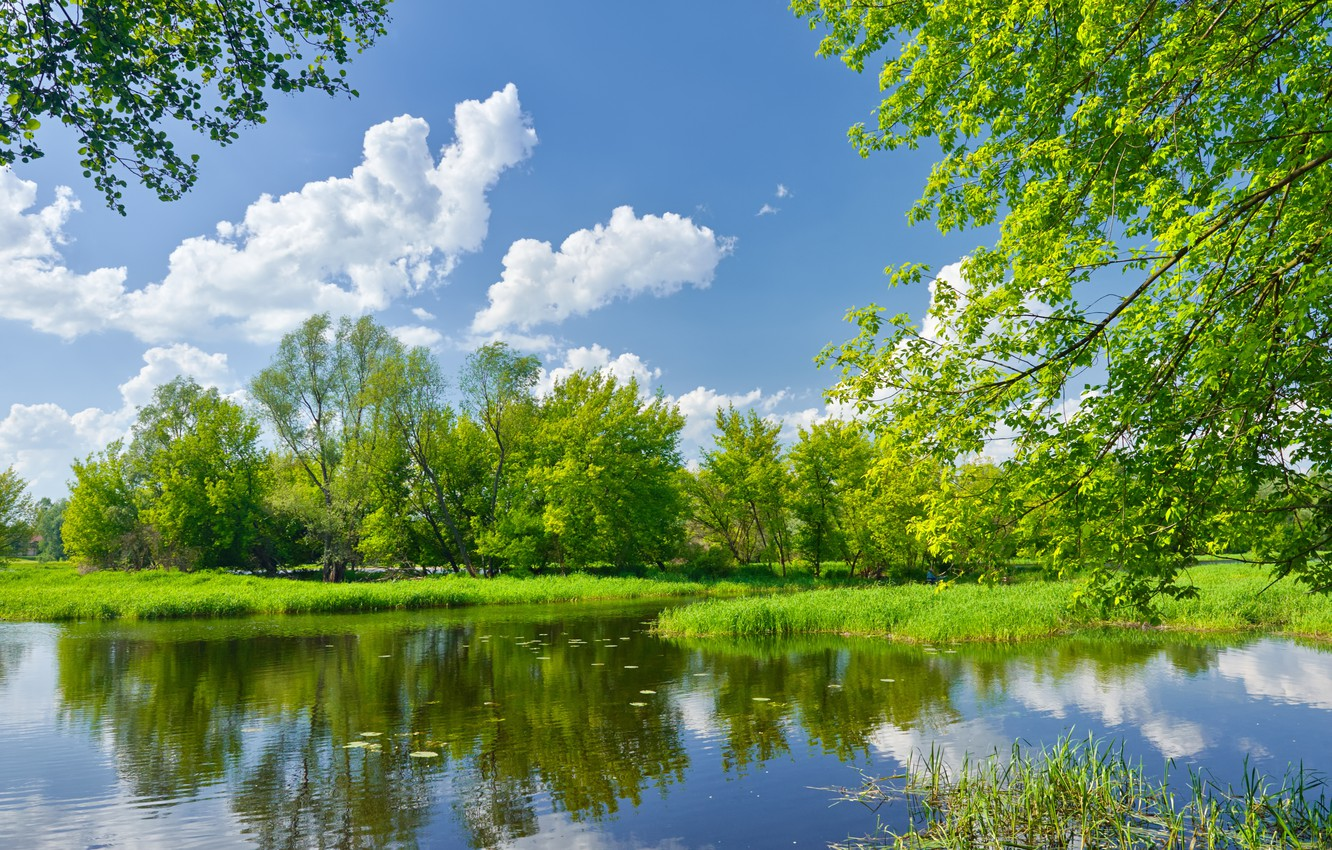 Photo wallpaper the sky, grass, clouds, trees, landscape, nature, green