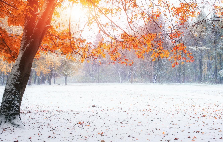 Photo wallpaper snow, Nature, Winter, Autumn, Trees