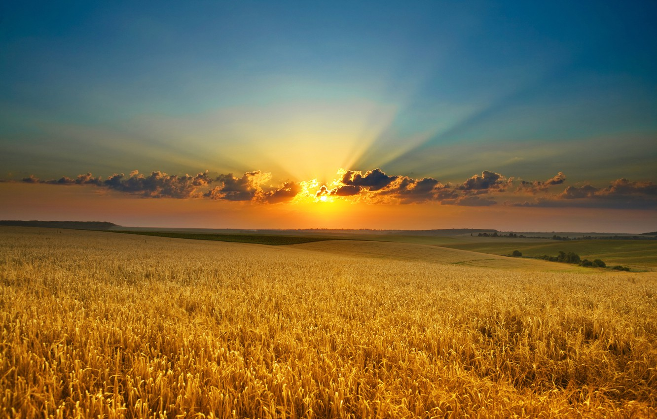 Photo wallpaper field, the sun, clouds, rays, sunset, nature, gold, dawn, beauty, ears
