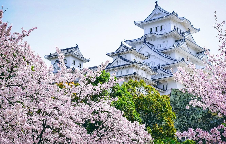 Photo wallpaper trees, castle, Japan, Sakura, pagoda