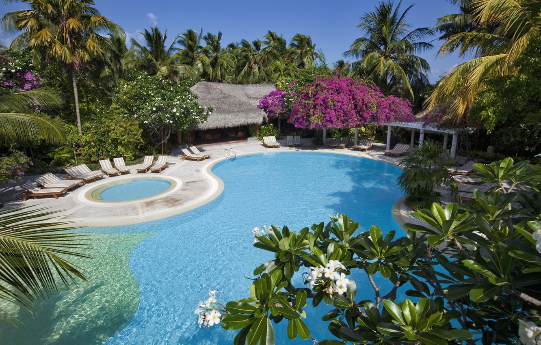 Photo wallpaper trees, nature, palm trees, pool, The Maldives, Bungalow, sun loungers, Maldives