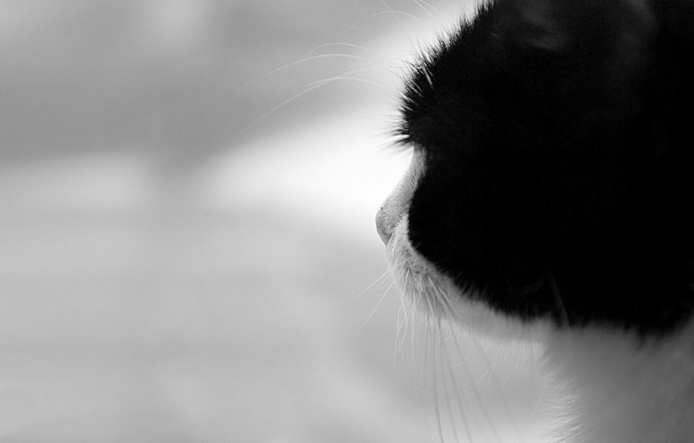 Photo wallpaper black and white, Koshak